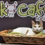 Neko Cafe Torino - Турин Италия