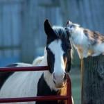 10 котов, у которых завелись странные друзья