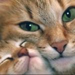 10 очаровательных кошек-мам (и их котят)