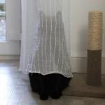 10 котов, которым стоило бы подучиться прятаться