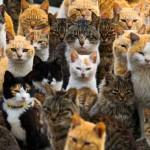 Нэкодзима: Тайна кошачьего острова