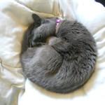 Учим геометрию с котиками! (10 фото)