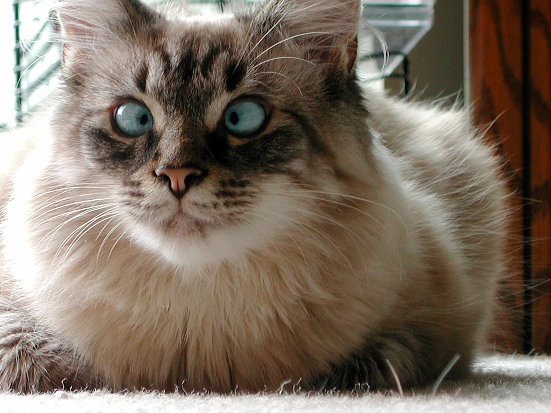 чан глаза в кучу фото кошка пробежала