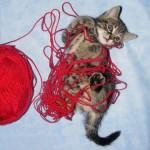 15 котов, которые учились вязать