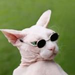 """Брайан Сетцер, """"Походка бродячего кота"""""""