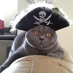 Пятнадцать смелых котов-мореходов
