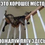 Смешные истории о кошках