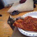 Смешные истории о кошках - дело о пропавшей колбасе