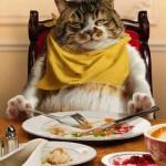 Смешные лимерики о кошачьем корме