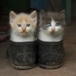 Вся правда о котах в сапогах