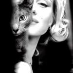 Мэрилин Монро и кошка