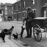 Уличный продавец мяса для кошек