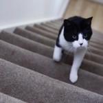 Чудеса дрессировки: как котики дрессируют своих хозяев