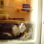 Котики в холодильнике