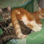 Двое друзей-котов