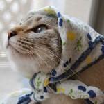 Кошки-бабушки в платочках