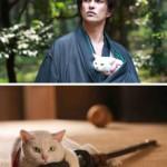 «Кото-самурай», Япония, 2014 год