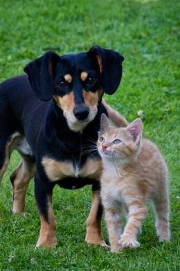 Кошки так же привязаны к людям как и собаки, показывают последние исследования