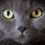 Дневник кота параноика