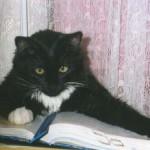 Рецензия на работу «Какими они были: О роли детства в личностном развитии котенка»