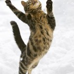 Кошки играют в снегу