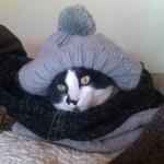 Котики советуют, как не замезнуть зимой