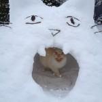 Почему кошатники делают лучших снеговиков (10 фото)