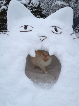 Снеговики в виде кошек